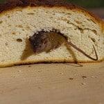 muizen en ratten 7
